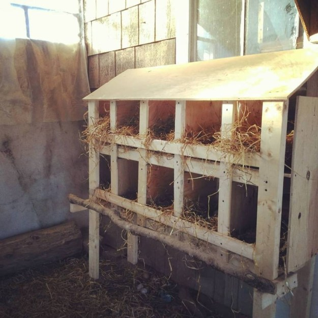 deluxe nesting boxes