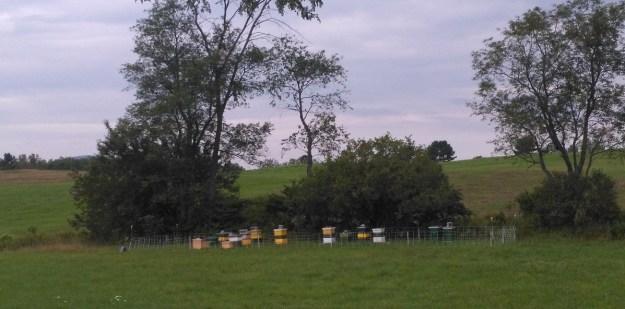 hyl-tun apiary