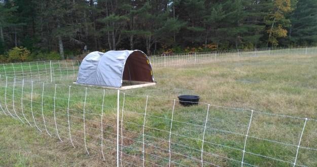 portable sheep shelter