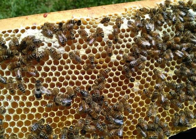 uncapped honey