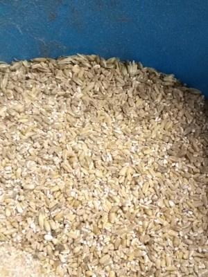 whole grains via maine grains