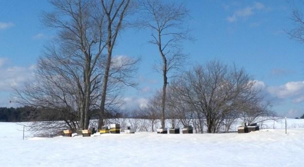 snowy apiary