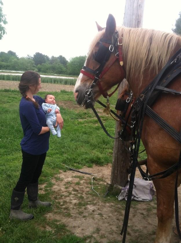 tender soles farm_kate delveccio_women farmers