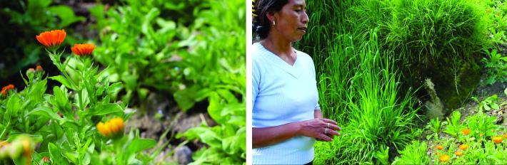 """""""Nosotros le tenemos mucho respeto a las plantas maestras y la wachuma ha guiado el camino"""" … """"Estoy contenta por ser los pioneros en sembrar caléndula en la zona"""""""