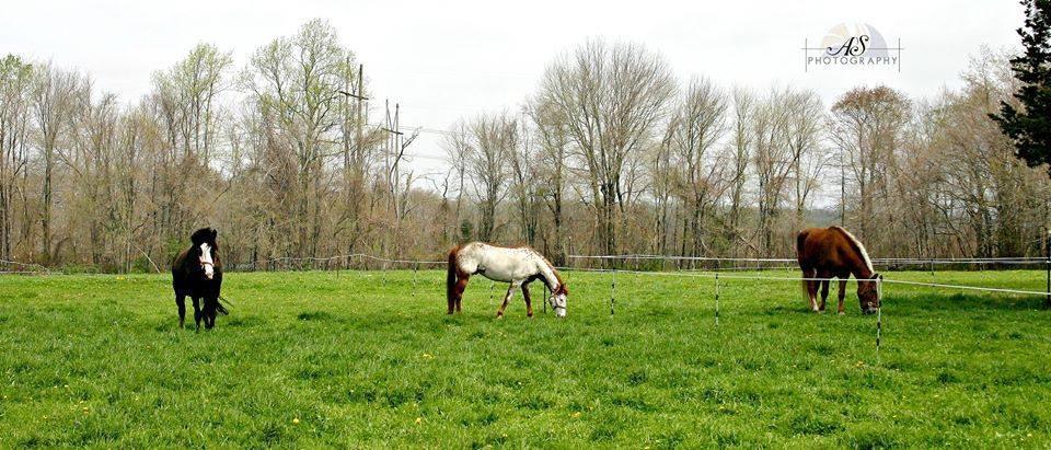 Run Away Farm Equine Boarding Facility Columbia CT