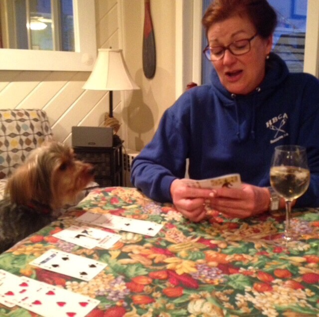 grief therapy dog playing Bridge