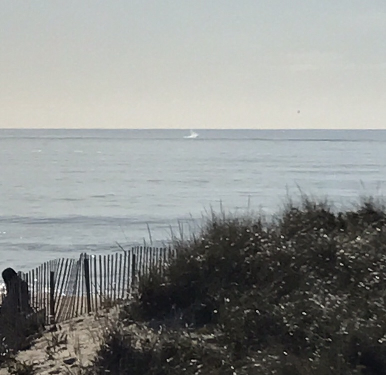 Whales in Montauk in winter