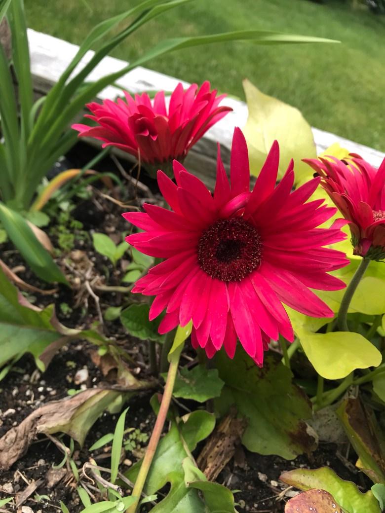 Widow's spring memorial garden in New York