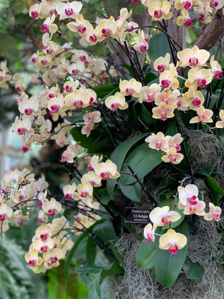 Bronx Botanical Garden Spring