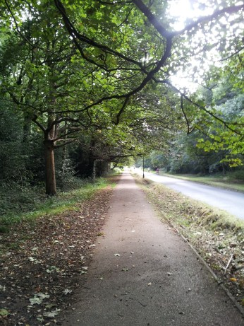 Picture of a leafy road