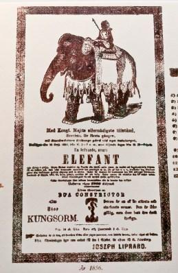 … se här träder elefantryttaren fram i all sin forna glans.