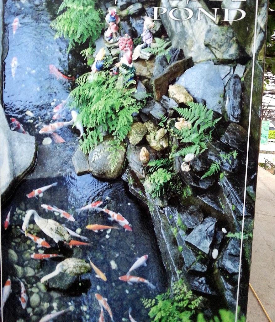 Fish pond runeatgossip for Garden pond reddit