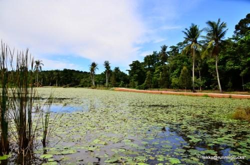 Pulau ubin runeatgossip for Koi pond labradors