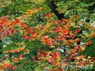 Fall 2012 (25) copy