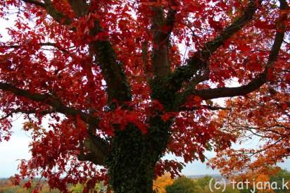 Fall 2012 (27) copy