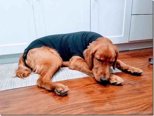 dog surgery collar alternative 1