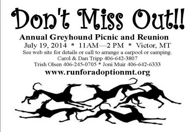 Home ~ About Greyhounds ~ Greyhound Guide ~ Hounds For