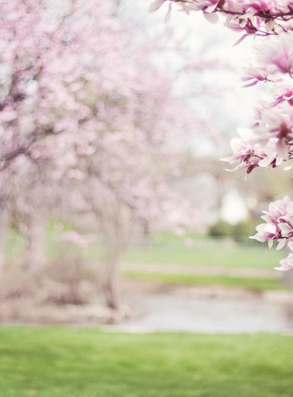 Spring Activity Ideas for the Family