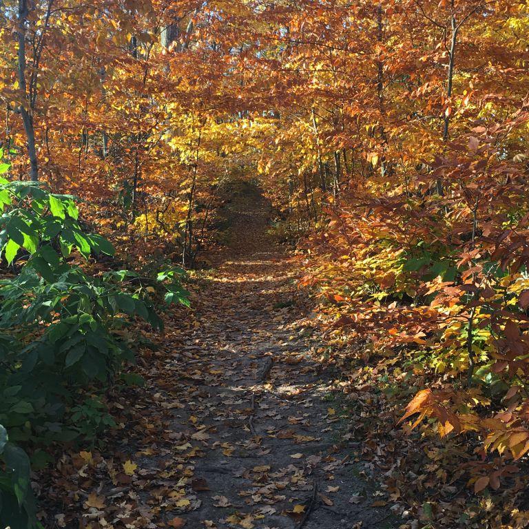 Planning a Leelanau County Fall Color Tour - Run Leelanau