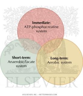 three energy systems running