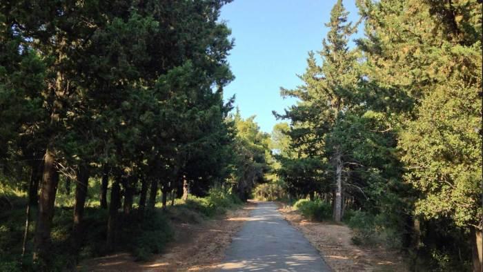 Βασιλικό Κτήμα Τατοΐου | Διαδρομή Τρέξιμο Αθλητισμός | Running Scenes Αθλητισμός Υγεία Διατροφή