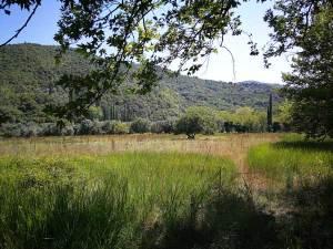 Πλατάνια και δέντρα στο ποτάμι του Εύηνου | Running Scenes Αθλητισμός Υγεία Διατροφή