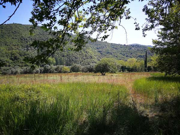 Πλατάνια και δέντρα στο ποτάμι του Εύηνου