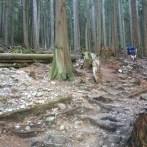 BCMC Trail