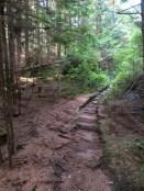 Wood path on Sandero Diez Vistas Trail, Coquitlam British Columbia