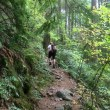 More up on Sandero Diez Vistas Trail, Coquitlam British Columbia