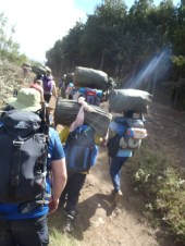 Our first steps on the trail, Day 1 Rongai Route, just us climbers and 30+ crew members carrying their gear and ours.