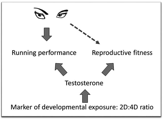 La performance en course à pied comme signal du potentiel reproductif