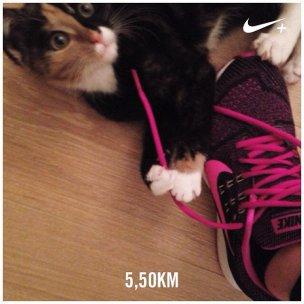 vijf kilometer