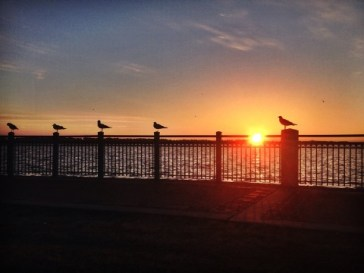 Birds on Railing at Sunrise 2