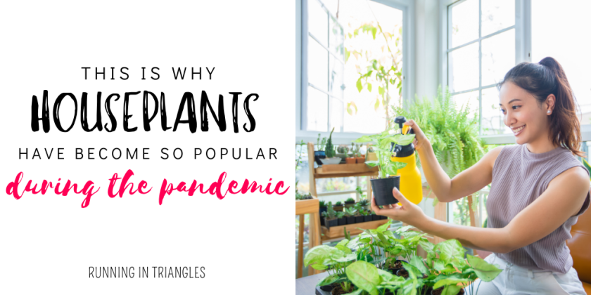 This is Why Houseplants Have Become Some Popular During the Pandemic