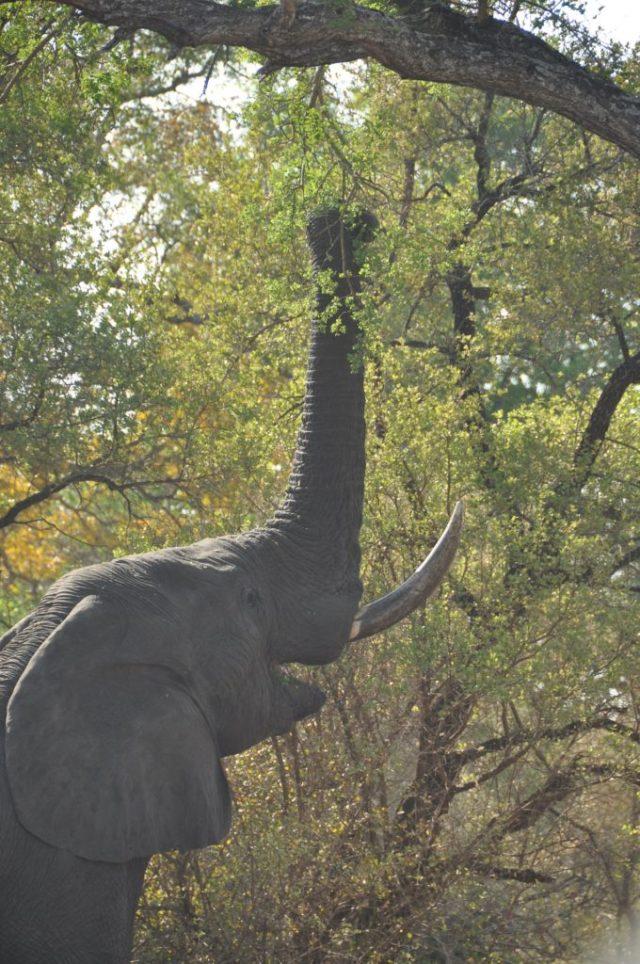 goals resolutions elephant