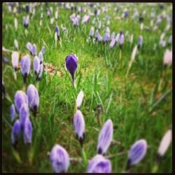 park Ondertussen in het park... april 2013