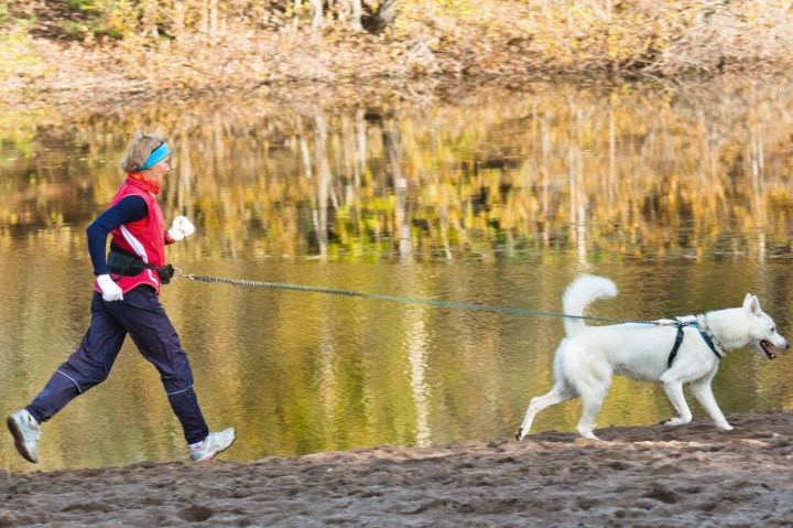 Do dogs feel endorphins (or a runner's high)?