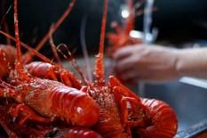 crayfish_kreef_runnybabbitcrafar