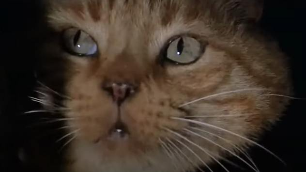 jones-jonesy-alien-cat
