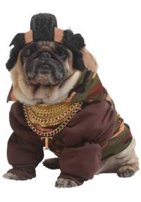 The Best Pug Costumes Known To Man