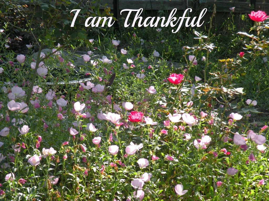 Daily Gratitude - Day 5