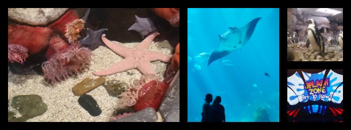 georgia aquarium 2016