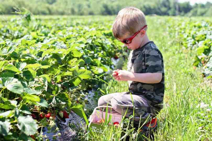 what to pack to pick strawberries with kids