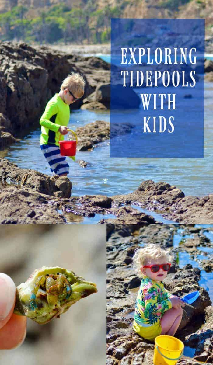 Exploring Tidepools with Kids