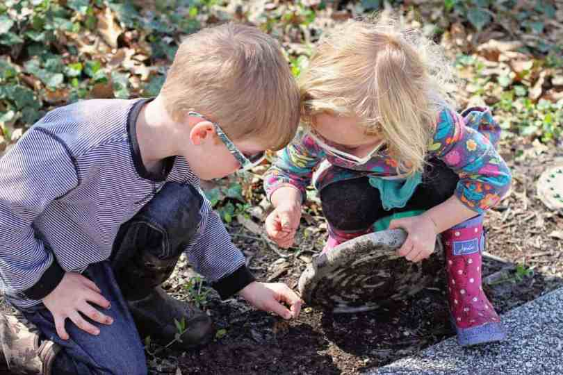 creating a wormery with kids
