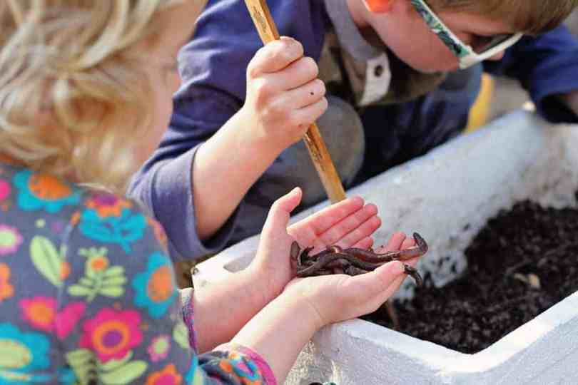 creating a wormery with kids for bait