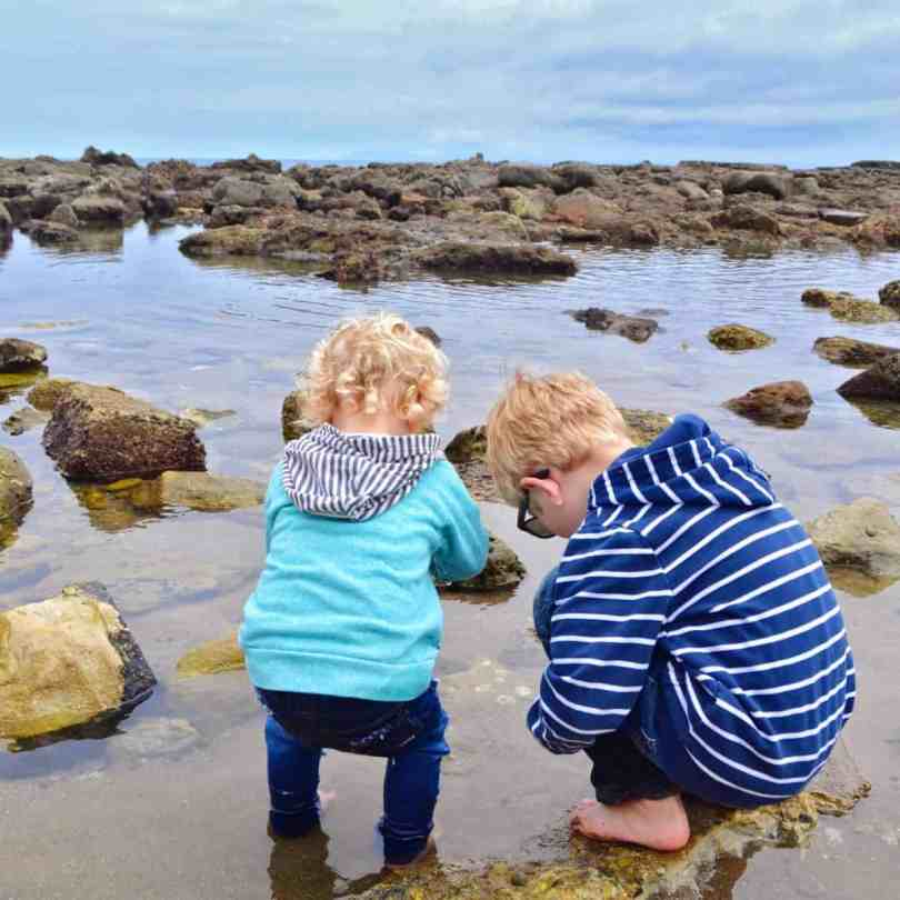 exploring california tide pools with kids