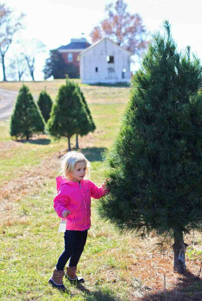 Cutting down your own Christmas tree with Kids