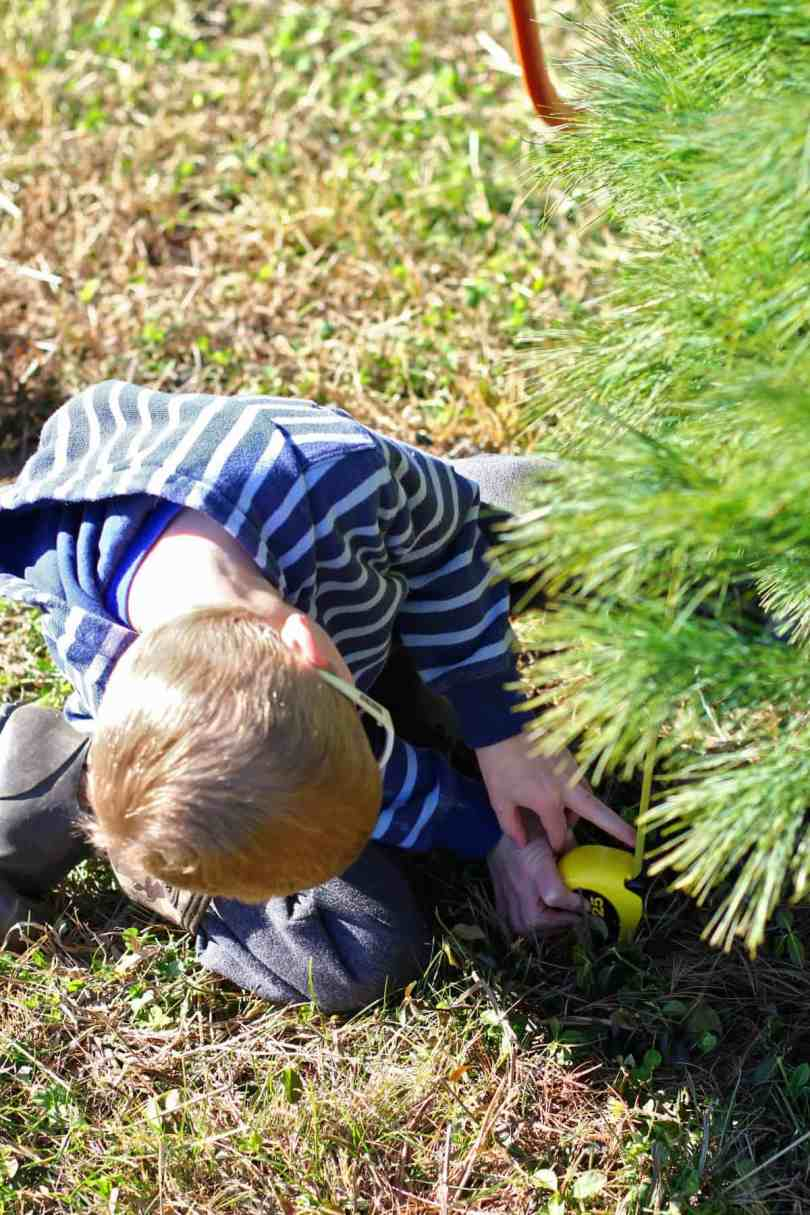 cut your own christmas tree with kids